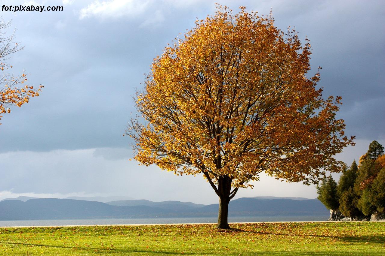fall-348316_1280